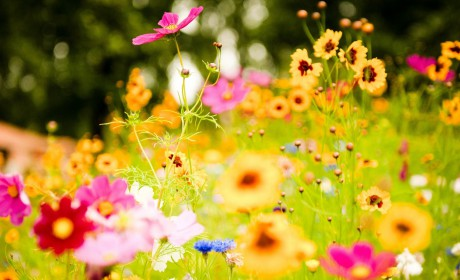colourful-flowers-images-and-wallpapers-32